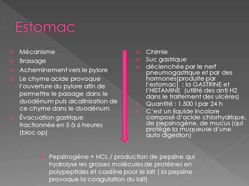 Mécanisme Brassage Acheminement vers le pylore Le chyme acide provoque louverture du pylore afin de permettre le passage dans le duodénum puis alcalinisation de ce chyme dans le duodénum Évacuation gastrique fractionnée en 5 à 6 heures (bloc op) Chimie Suc gastrique déclenchée par le nerf pneumogastrique et par des hormones(produite par lestomac) : la GASTRINE et lHISTAMINE (utilité des anti H2 dans le traitement des ulcères) Quantité : 1.500 l par 24 h Cest un liquide incolore composé dacide chlorhydrique, de pepsinogène, de mucus (qui protège la muqueuse dune auto digestion) Pepsinogène + HCL / production de pepsine qui hydrolyse les grosses molécules de protéines en polypeptides et caséîne pour le lait ( la pepsine provoque la coagulation du lait)