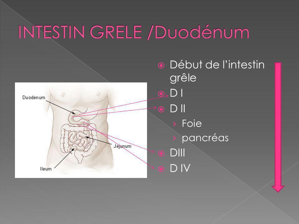 Début de lintestin grêle D I D II Foie pancréas DIII D IV