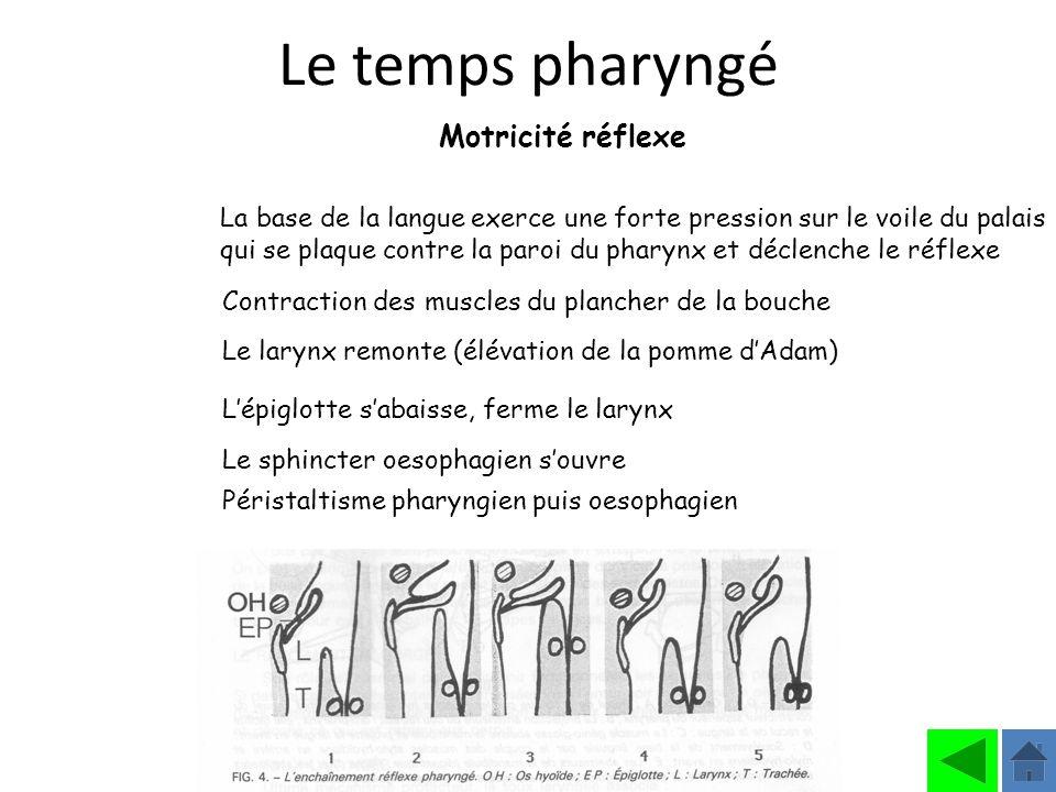 Institut Motricité Cérébrale Philippe Toullet La base de la langue exerce une forte pression sur le voile du palais qui se plaque contre la paroi du p