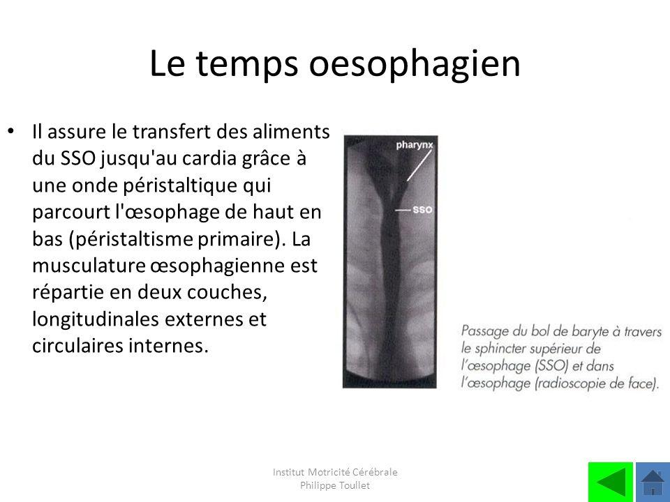 Institut Motricité Cérébrale Philippe Toullet Le temps oesophagien Il assure le transfert des aliments du SSO jusqu'au cardia grâce à une onde pérista
