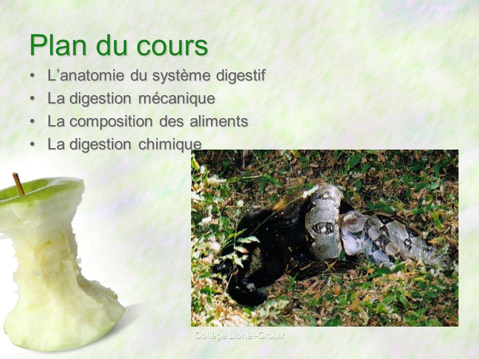 Collège Lionel-Groulx Schéma simplifié dun être humain Bouche Anus