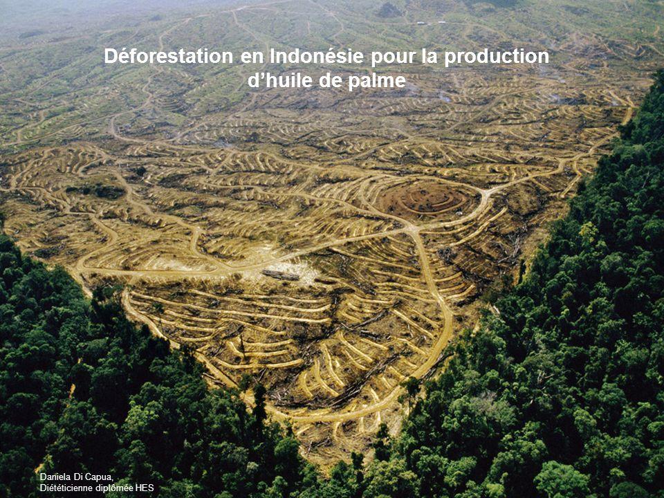 Daniela Di Capua, Diététicienne diplômée HES Déforestation en Indonésie pour la production dhuile de palme