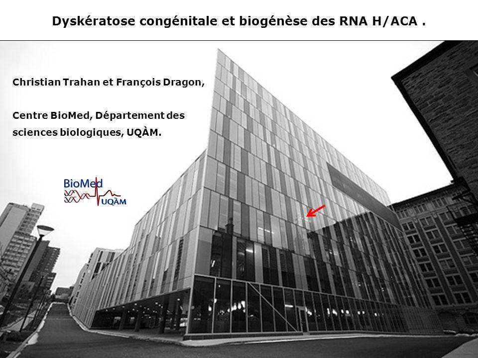 Dyskératose congénitale et biogénèse des RNA H/ACA.