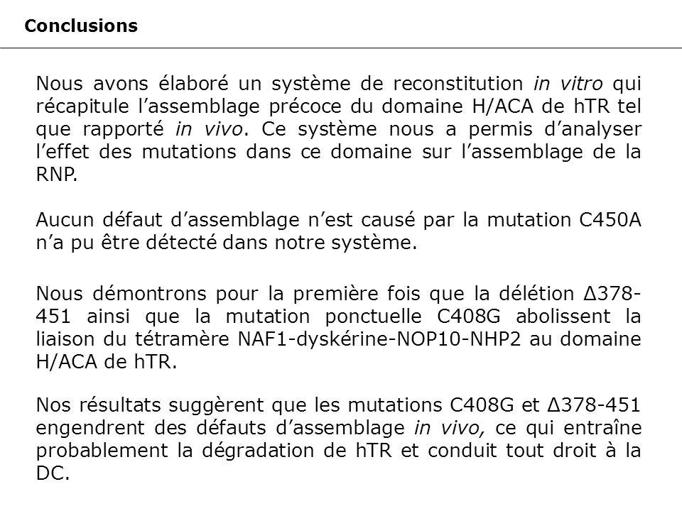 Conclusions Nous avons élaboré un système de reconstitution in vitro qui récapitule lassemblage précoce du domaine H/ACA de hTR tel que rapporté in vivo.