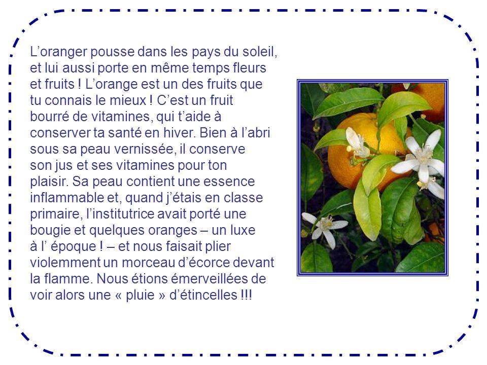 Fleur et fruit de loranger