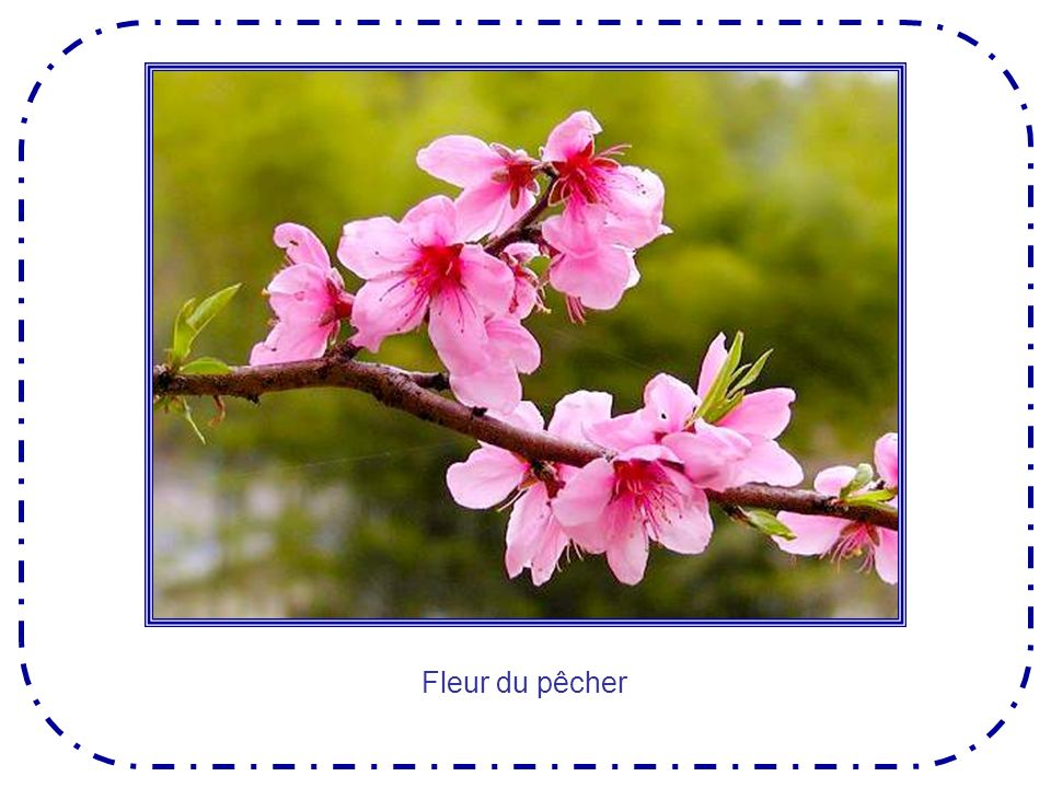 Loranger pousse dans les pays du soleil, et lui aussi porte en même temps fleurs et fruits .