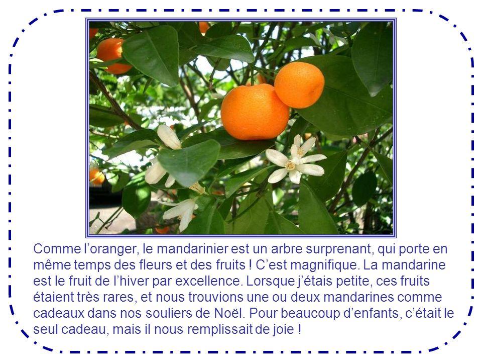 Fruit du mandarinier
