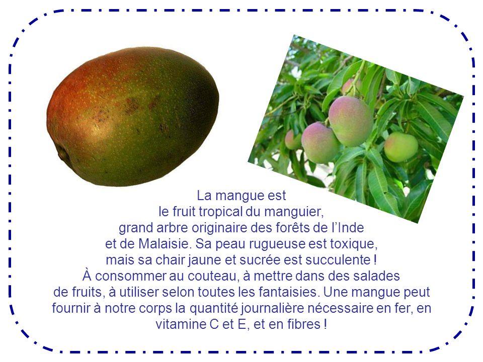 Fleur de manguier
