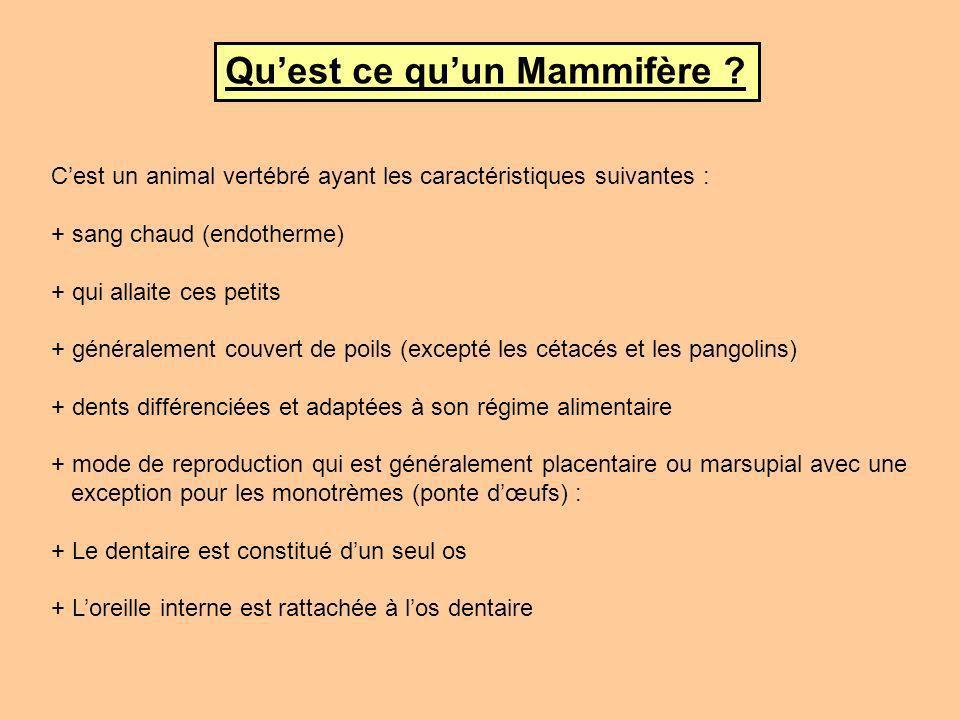 Quelques rappels sur la classe Mammalia Ces animaux sont apparus durant le Permo-Trias, dont la lignée exacte reste pour le moment assez floue et complexe à situer exactement, suivant la définition et les critères que lon applique au terme de Mammifères.
