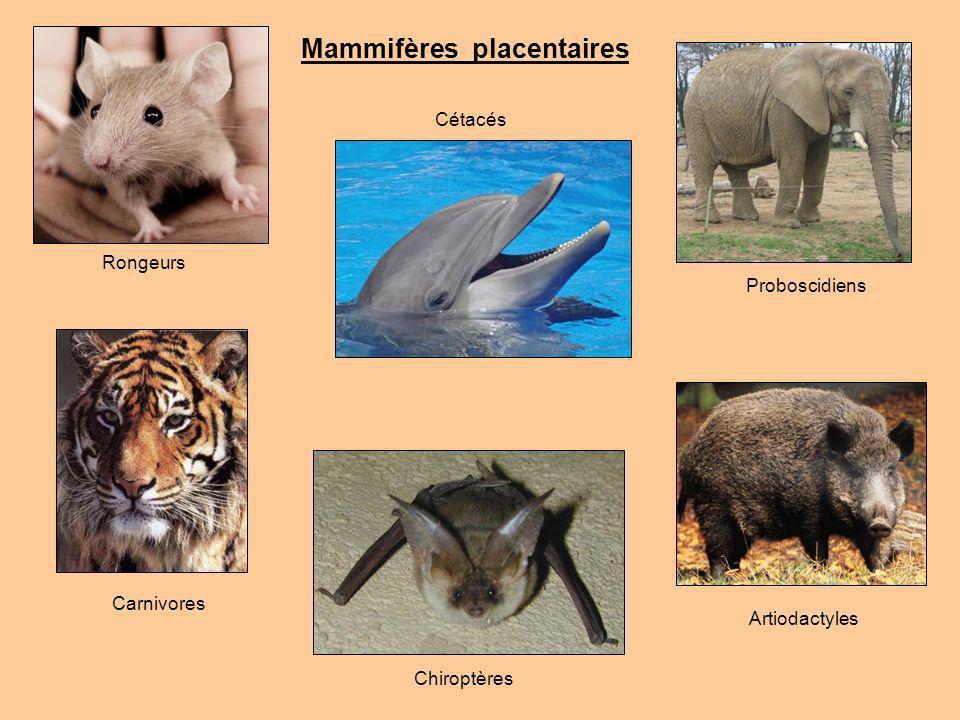 Fonction des dents (2/3) + Outil Exemple : 1) Défenses déléphants : Incisives utilisée pour déterrer ou faire tomber des végétaux 2) Morse se servant de leur défense pour monter sur la banquise et dénicher ses proies.
