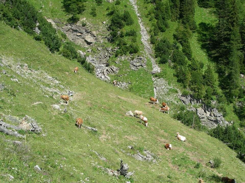 Les alpages sont magnifiques et les vaches ont une belle herbe fraîche à manger. Tout en poursuivant notre chemin très raide Nous apprécions ce magnif