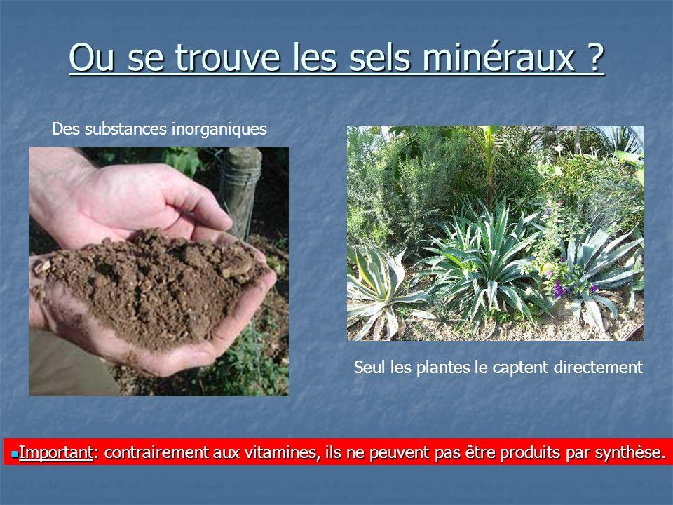 Ou se trouve les sels minéraux ? Seul les plantes le captent directement Des substances inorganiques Important: contrairement aux vitamines, ils ne pe