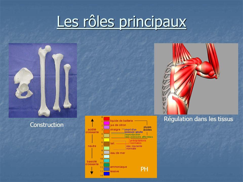 Les rôles principaux Construction Régulation dans les tissus PH