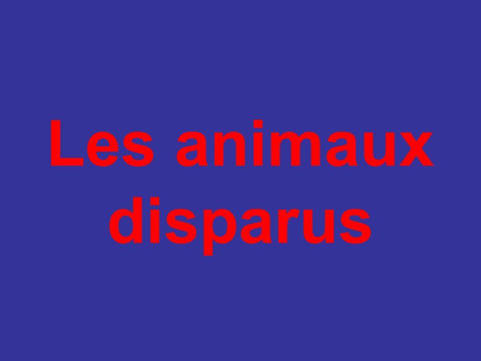 Marsupial comme le kangourou, la femelle pouvait porter jusqu à 4 petits dans sa poche ventrale.