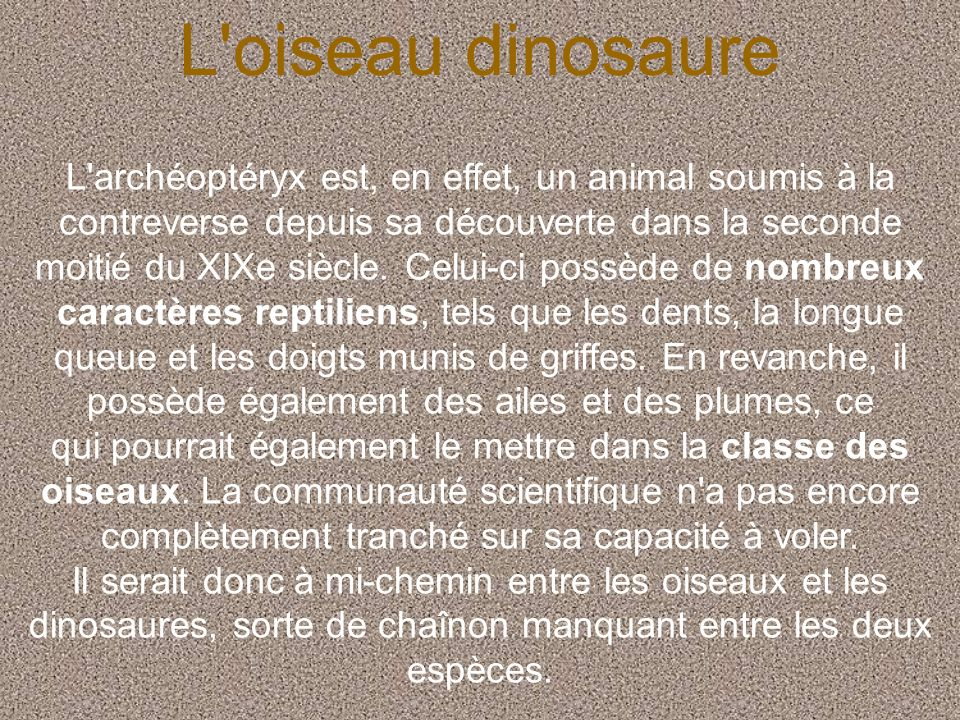 L'oiseau dinosaure L'archéoptéryx est, en effet, un animal soumis à la contreverse depuis sa découverte dans la seconde moitié du XIXe siècle. Celui-c