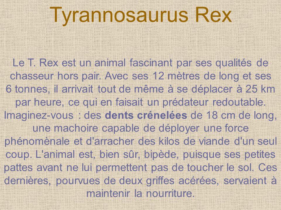 Le T. Rex est un animal fascinant par ses qualités de chasseur hors pair. Avec ses 12 mètres de long et ses 6 tonnes, il arrivait tout de même à se dé