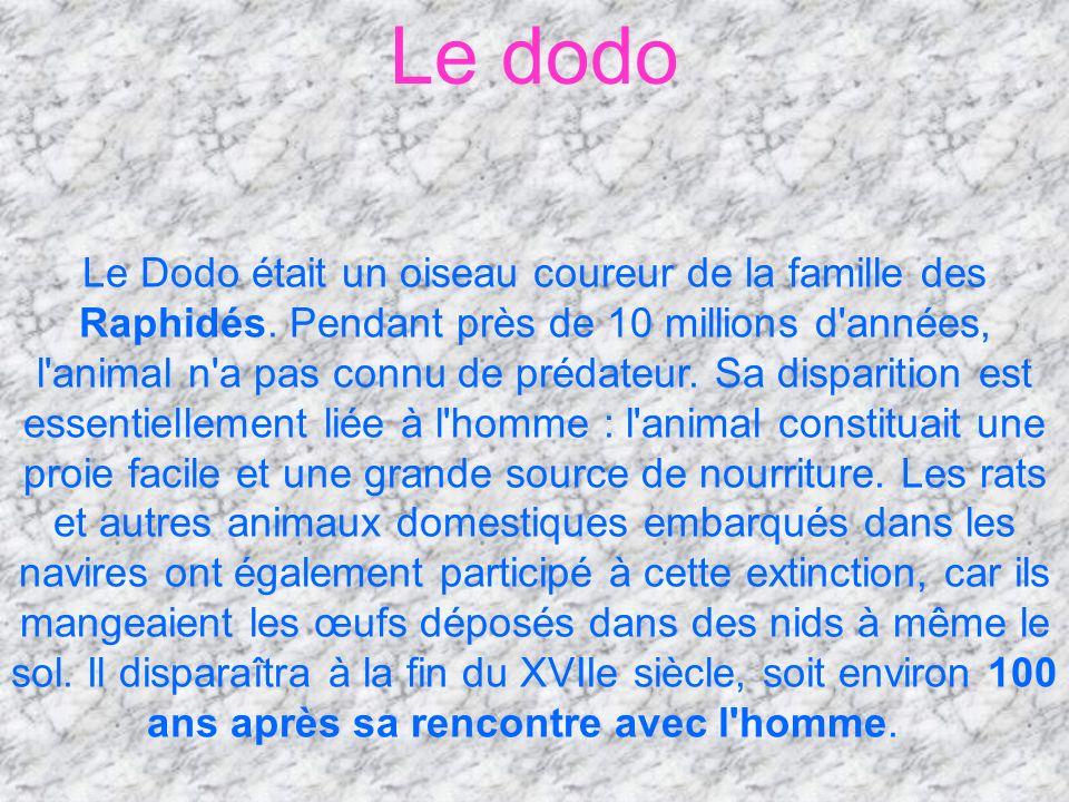 Le Dodo était un oiseau coureur de la famille des Raphidés. Pendant près de 10 millions d'années, l'animal n'a pas connu de prédateur. Sa disparition