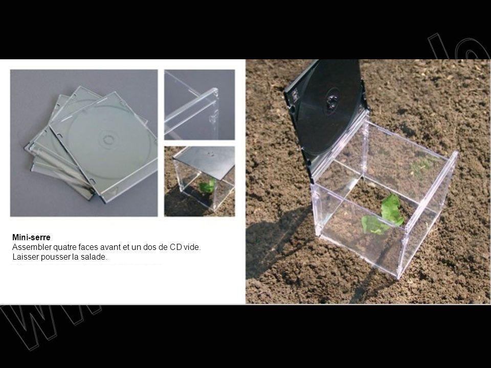 Mini-serre Assembler quatre faces avant et un dos de CD vide. Laisser pousser la salade.