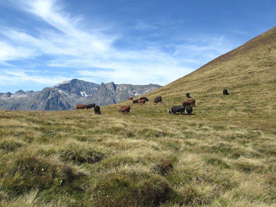Le Mont Blanc 4810 m.