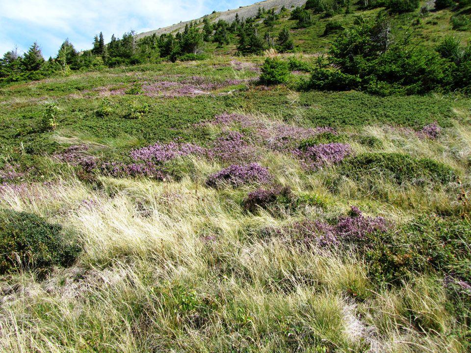 Le chemin qui mène à la Croix de Fer 2343 m.