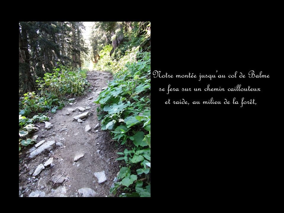 Notre montée jusquau col de Balme se fera sur un chemin caillouteux et raide, au milieu de la forêt,