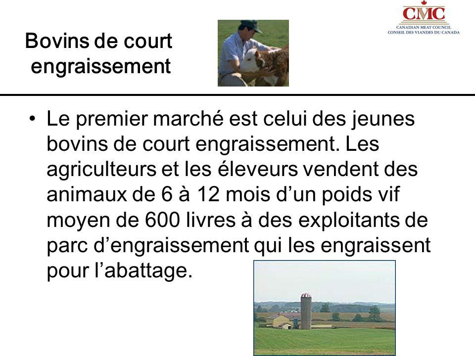 Le deuxième marché est celui des bovins dabattage sur lequel les exploitants de parc dengraissement vendent des bêtes de 18 à 24 mois dun poids vif moyen de 1 300 livres aux exploitants dabattoir.
