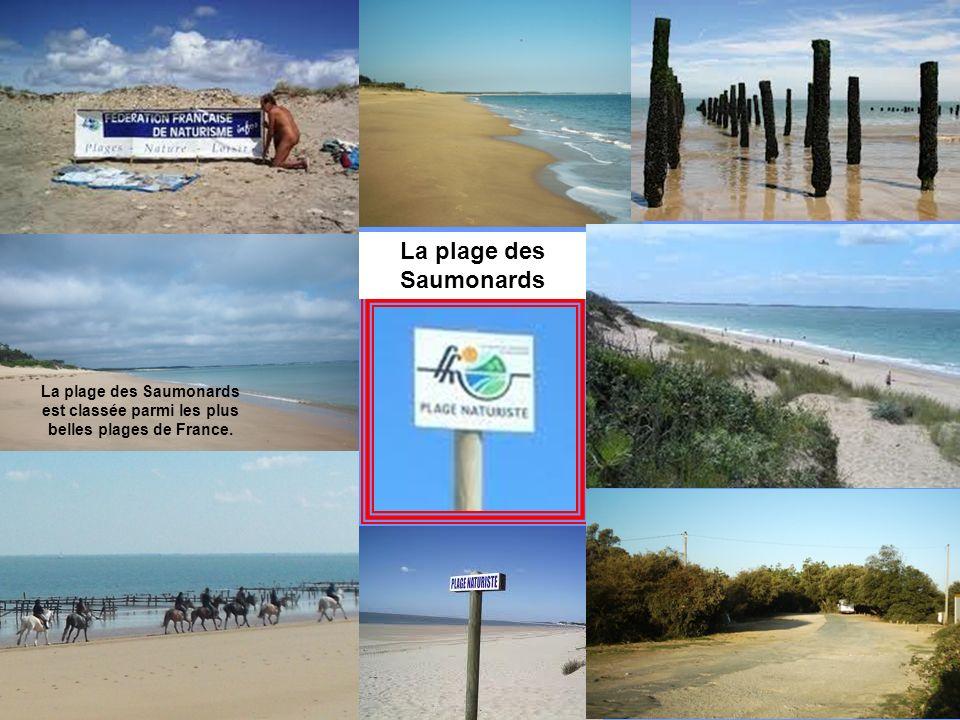 Les dunes sont fragiles! Respectez -les A marée basse, La plage de Vert Bois est un endroit idéal pour la pêche à pieds. Destruction des bunkers Vert