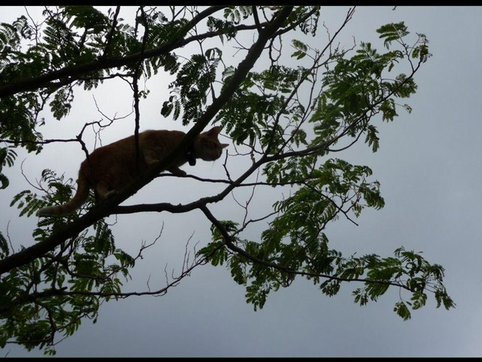 A plus de 7 m daltitude, Pompon cherche le moyen de sévader
