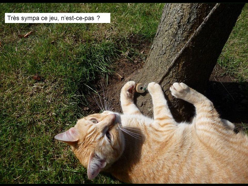 Ce matin-là, une branche de labricotier sest cassée, Pompon est très étonné
