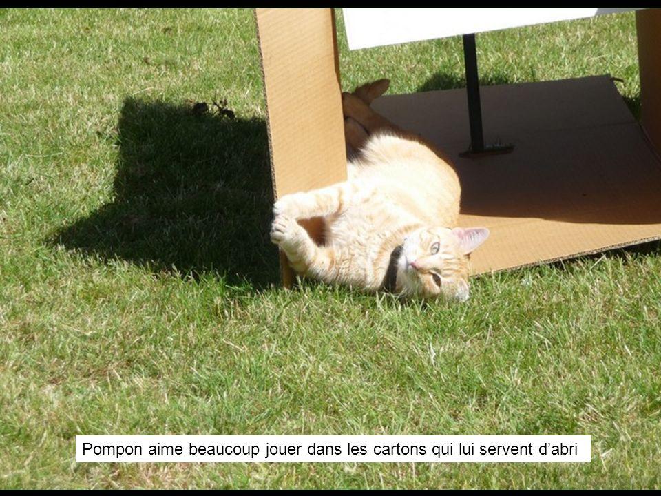 Pompon aime beaucoup jouer dans les cartons qui lui servent dabri