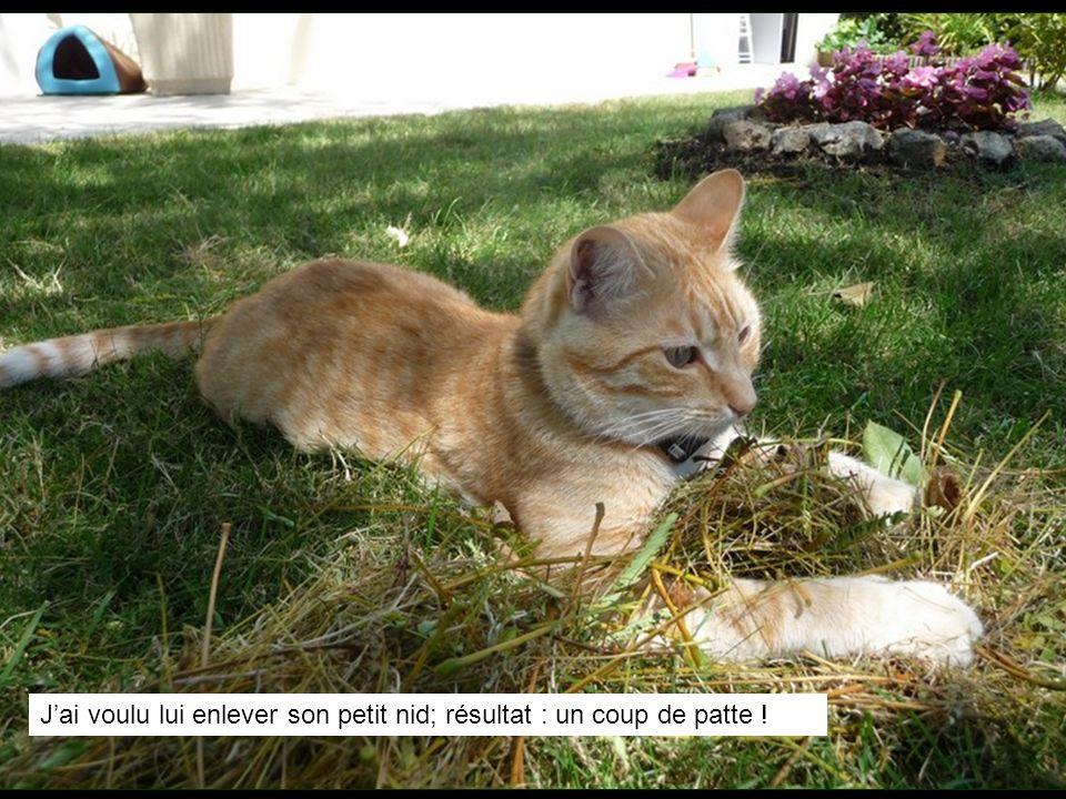 Je ratissais la pelouse, Pompon sest approprié les débris….