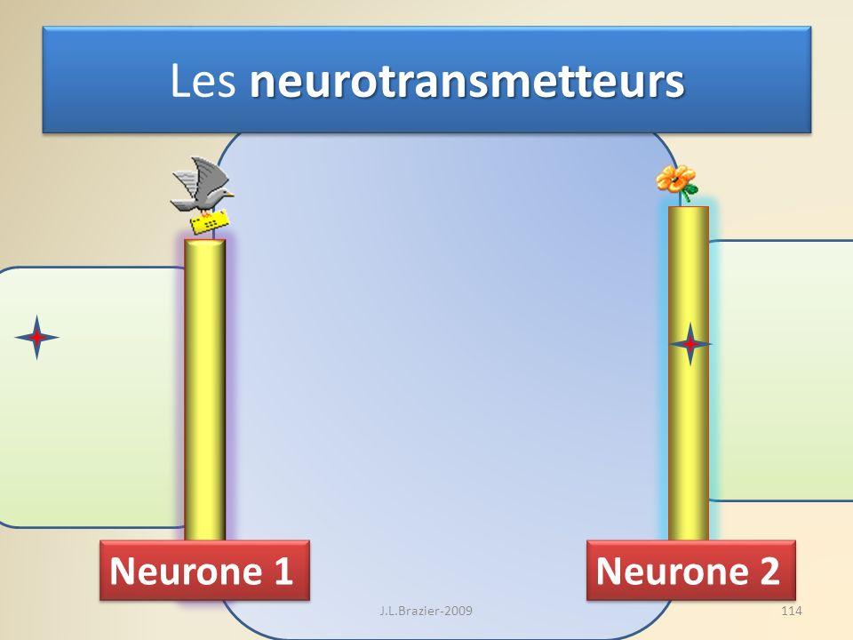 neurotransmetteurs Les neurotransmetteurs Neurone 1 Neurone 2 114J.L.Brazier-2009