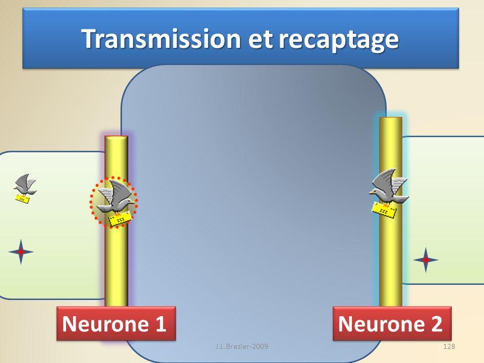 Transmission et recaptage Neurone 1 Neurone 2 128J.L.Brazier-2009