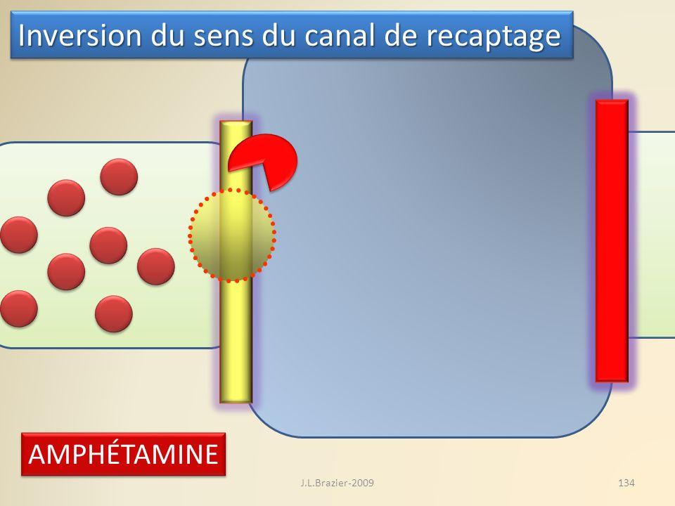 AMPHÉTAMINE Inversion du sens du canal de recaptage 134J.L.Brazier-2009