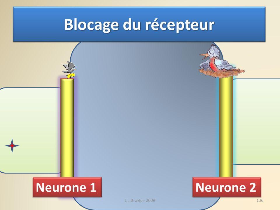 Neurone 1 Neurone 2 Blocage du récepteur 136J.L.Brazier-2009