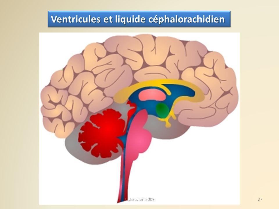 Ventricules et liquide céphalorachidien 27J.L.Brazier-2009