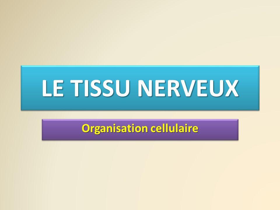 LE TISSU NERVEUX Organisation cellulaire
