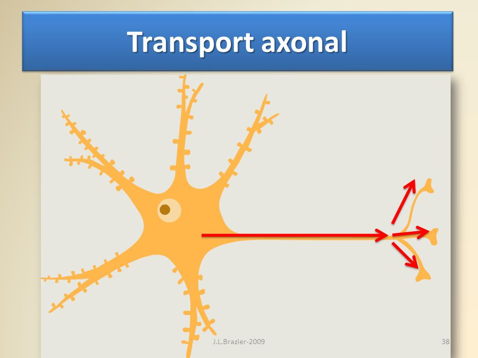 Transport axonal 38J.L.Brazier-2009