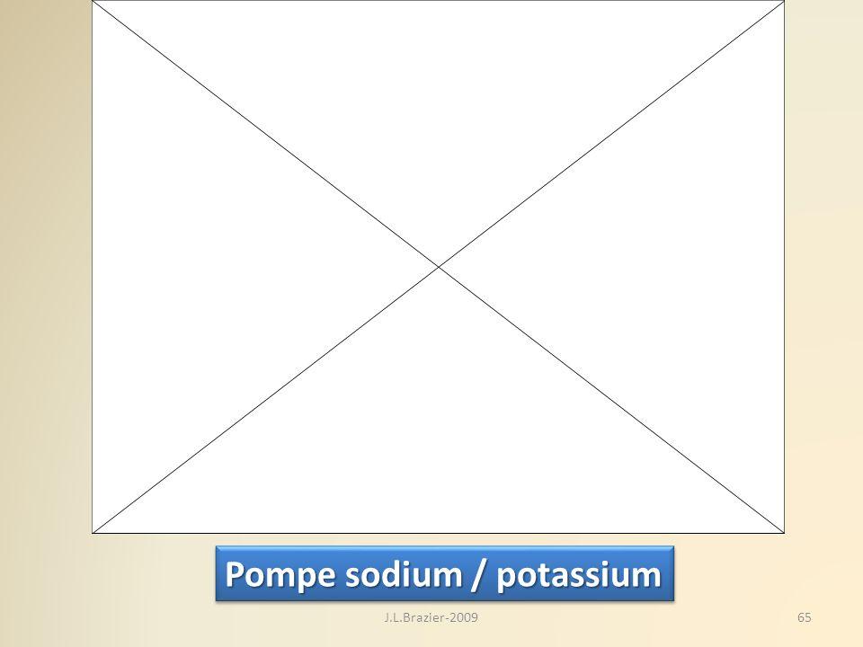 Pompe sodium / potassium 65J.L.Brazier-2009