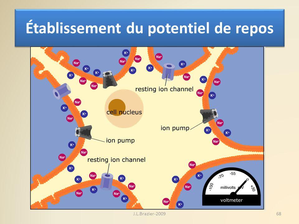 Établissement du potentiel de repos 68J.L.Brazier-2009