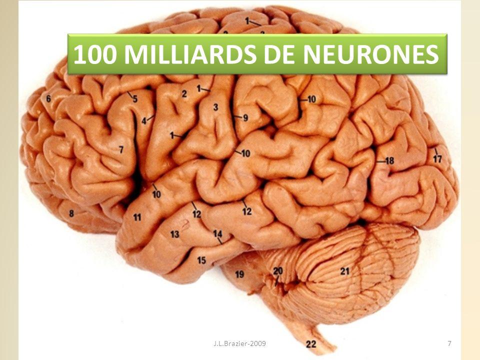 100 MILLIARDS DE NEURONES 7J.L.Brazier-2009