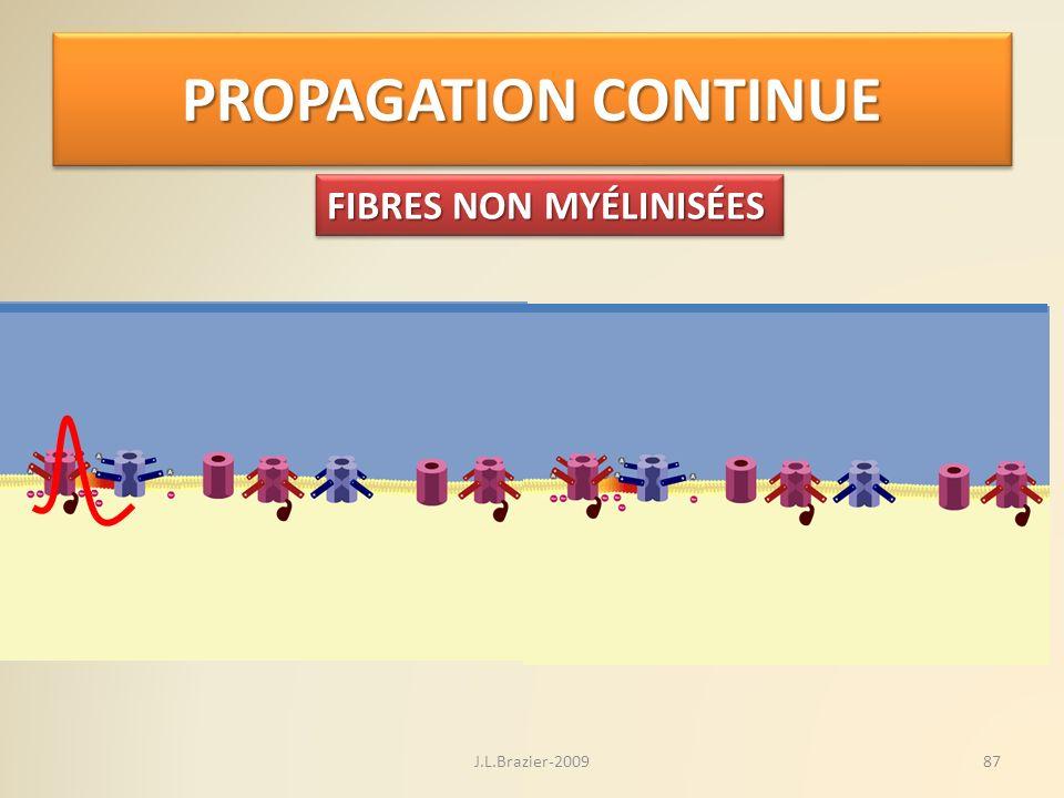 PROPAGATION CONTINUE FIBRES NON MYÉLINISÉES 87J.L.Brazier-2009