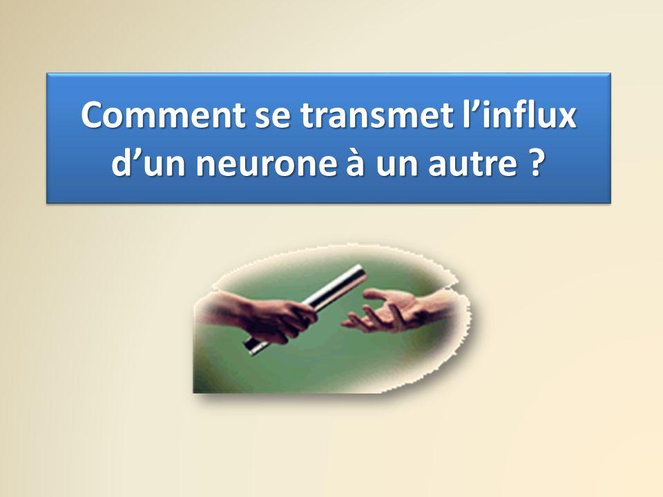 Comment se transmet linflux dun neurone à un autre ?