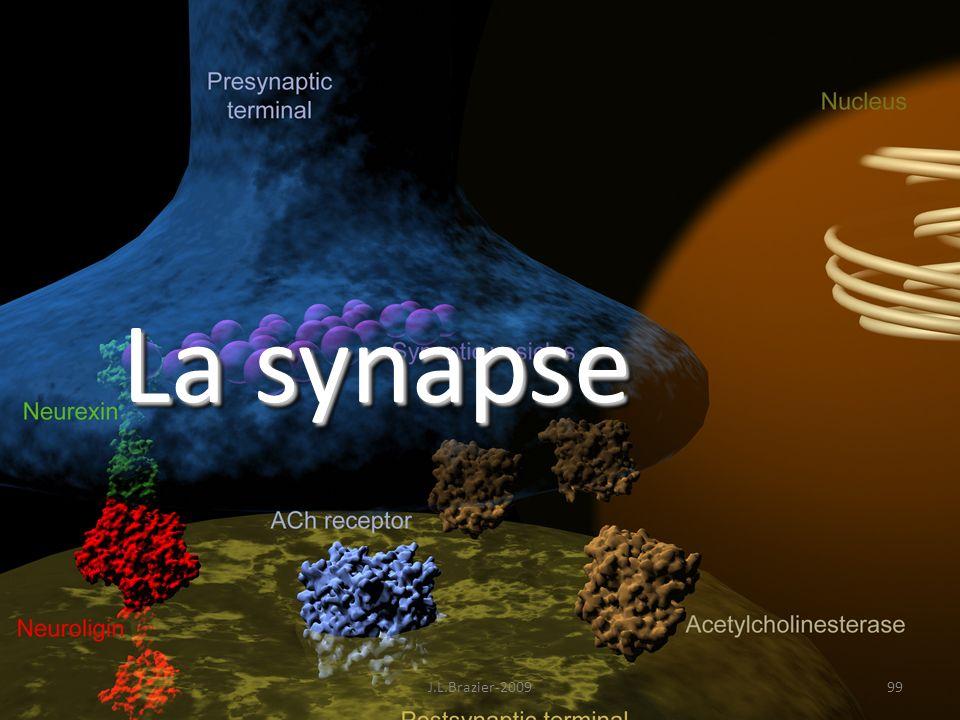 La synapse 99J.L.Brazier-2009