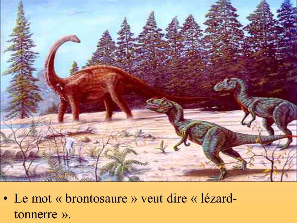 Ce dinosaure sappelle le « brontosaure ». Il mange des feuilles et de lherbe, cest un herbivore.