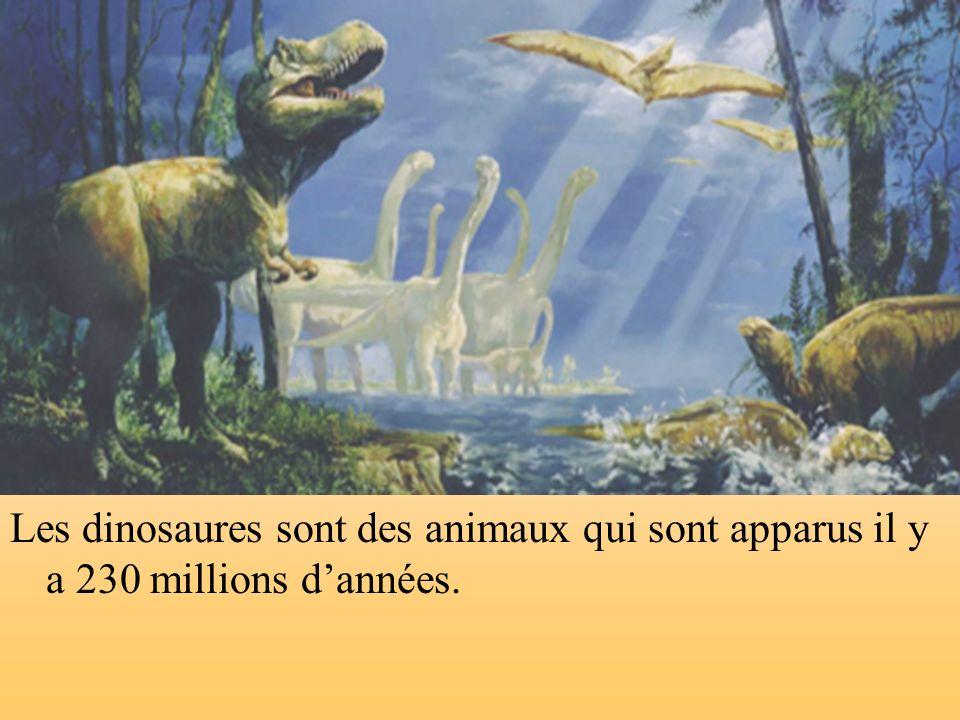 Les dinosaures sont des animaux qui sont apparus il y a 230 millions dannées.