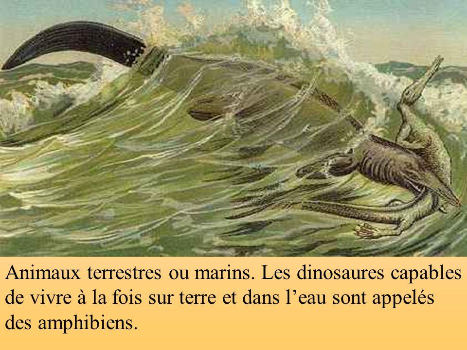 Animaux terrestres ou marins.