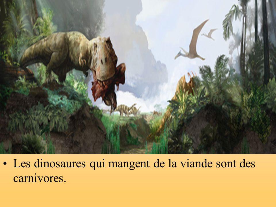 Il y avait des dinosaures qui ne mangeaient que des feuilles et de lherbe. Ce sont des herbivores.