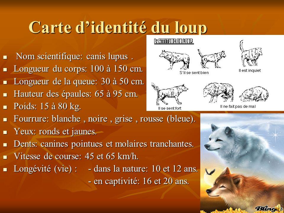 Carte didentité du loup Nom scientifique: canis lupus.