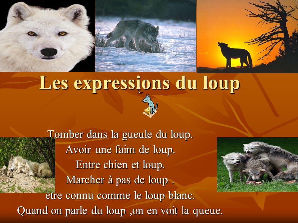 Les expressions du loup Tomber dans la gueule du loup.